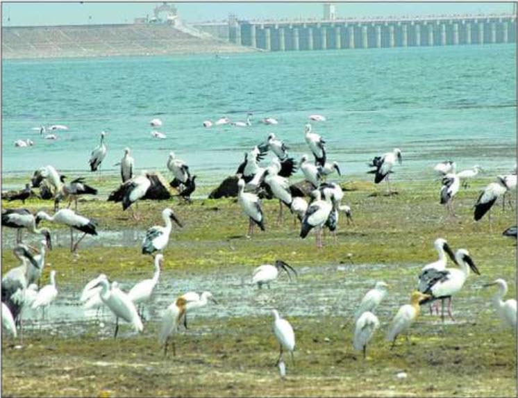 jayakwadi bird sanctuary